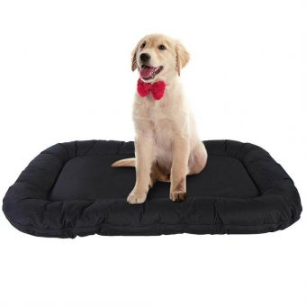 Best Cushions For Dogs